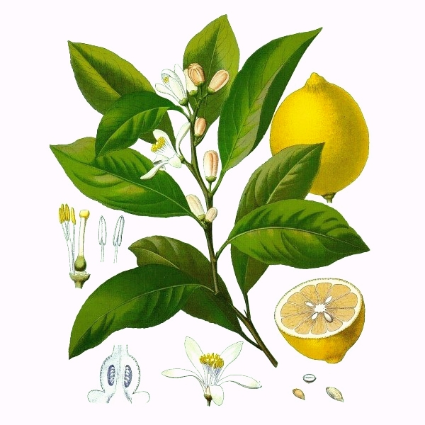 citron jaunebio